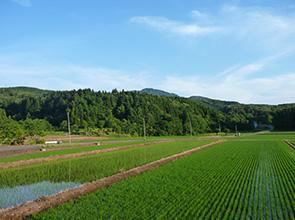 農地写真02